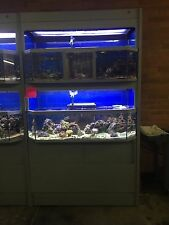 DAS Retail Display Salt or Fresh Water Aquarium