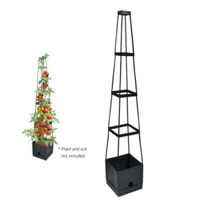 Plant Tower Box Garden Planter Box Flower Bougainvillea Climbing Plants