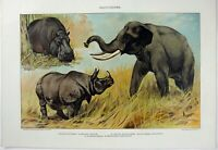Pachyderms: Original 1902 Chromo-Lithograph by Julius Bien. Elephant Rhino Hippo