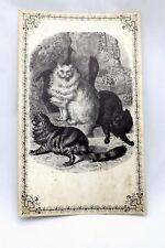 Vtg Cat Antique Look Sketching Postcard Huge 3 Bs Ltd Great Falls Va 1968 10x6