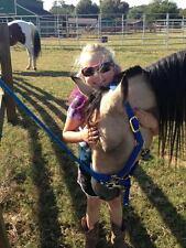 Naturally Despooking Your Horse 2 DVD Set