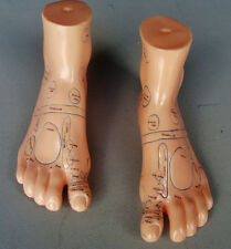 "Model Anatomy Professional Medical Foot Massage 17cm 7"" It-104 Artmed"