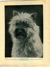 1930 Book Plate Print Cairn Terrier Drungewick Jennifer Hamish Gesto Landscer