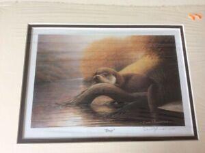 "Vintage mounted print by David J Lawrence ""Dozy"", an otter on a riverbank"