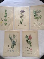 Lot Of 5 Botanical Book Prints