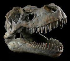 Calavera - Tiranosaurio Rex medio - Fossil Dino T-Rex Esqueleto Decoración