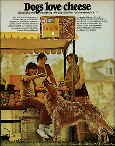1972 Irish Setter Ken-L Ration Cheese Burger girl mom retro photo print ad L75