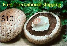 Royal Agaricus Bisporus Portobello champignon mushroom Spore 10.000+ fresh seeds