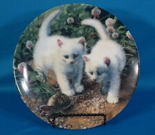 """Knowles """"A Chance Meeting: White American Shorthairs"""" by Amy Brackenbury Plate"""