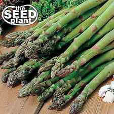 Mary Washington Asparagus Seeds -50 Seeds Non-Gmo