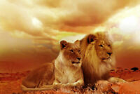 ZWPT1136 two animals lions handmade painted oil painting art on Canvas