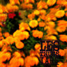 LES THUGS I.A.B.F. NINETEEN SOMETHING RECORDS LP VINYLE NEUF NEW VINYL