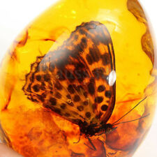 Beautiful Resin Amber  Butterfly Insect Stone Pendant Necklace 1.6x0.8x2'' Lady