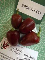 Brown Egg Chili - 5+ seeds - RARE HABANERO VARIETY!
