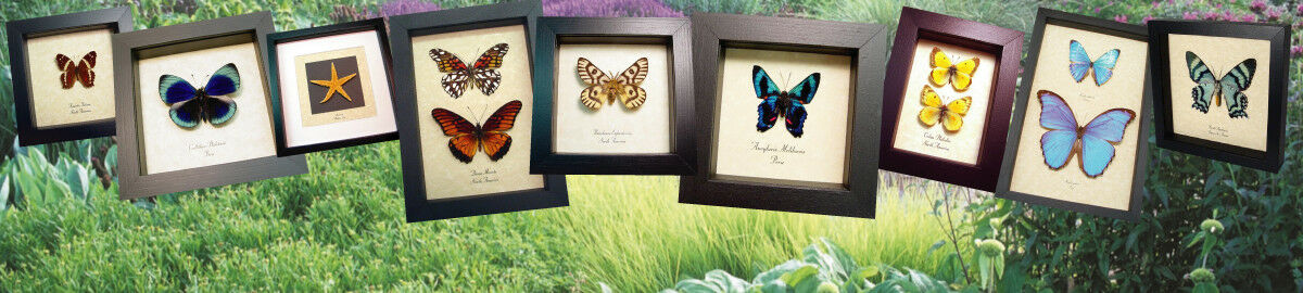 Real Butterfly Gifts