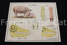 O989 Affiche scolaire ancienne vache squelette sabot porc Rossignol 90*75