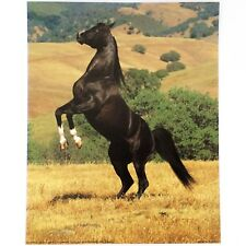 """POSTERS HORSES PACK OF 4 VARIOUS PRINTS 8""""X10"""" ART HOME DECOR PICTURE"""