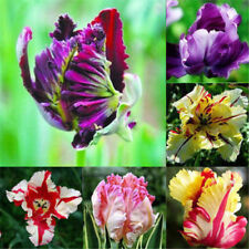 100Pcs Mixed Color Beautiful Rare Parrot Tulip Bulbs Home Garden Decor Flower