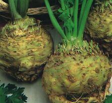 Vegetable - Celeriac - Giant Prague - 1250 Seeds - Economy
