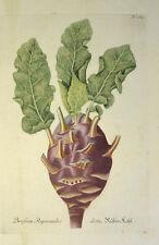 1735-45 coles rizadas remolacha Brassica oleracea svensson Cabbage Weinmann cobre