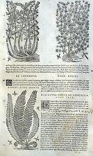 Helechos Lonchitis Garance Botánica Matthioli Mattioli Matthiole Dioscorides