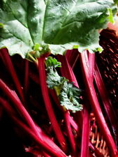 0.5g (appr. 50) rhubarb seeds VICTORIA Improves a gastric acidity & an appetite