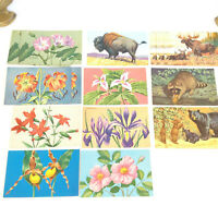Postcards Lot Vintage Color Flower Animals Americana Small Frameable Litho Art