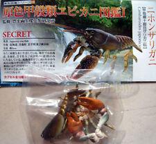 原色甲殼類圖鑑龍蝦Yujin Shrimps and Crabs SECRET cambaroides japonicus langouste,lobster