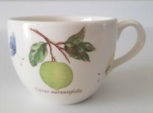 Wedgwood China Sarah's Garden Queen's Ware Coffee Teacup Citrus Celastrina NEW
