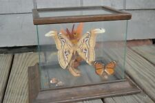 Beautiful Butterfly Moth Diorama Glass Case Real Specimens