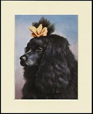 POODLE BLACK DOG HEAD STUDY LOVELY PRINT MOUNTED READY TO FRAME