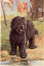 Puli - Matted Dog Art Print - German / New U