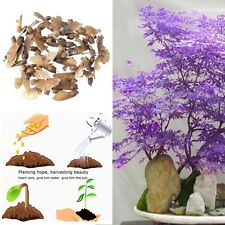 30pcs Rare Purple Ghost Japanese Maple Bonsai Tree Seeds Potted Plant Home Decor
