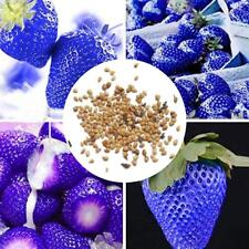 300×exotiques graines de fraises bleues de délicieux fruits des plantes jar