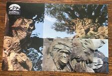 Animal Kingdom Tree Of Life Attraction Disney Park Postcard Error UNPOSTED