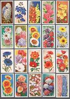 1939 Godfrey Phillips Annuals Tobacco Cards Complete Set of 50