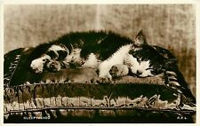 40s Real Photo Cat Postcard Tabby Kitten on Pillow, Sleepyhead, R.P.4 Valentines
