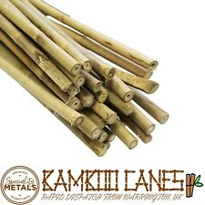 More details for 6ft long heavy duty bamboo canes (14-16mm) thickness plant support