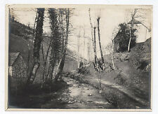 PHOTO ANCIENNE Sous Bois Forêt Rivière Arbre Cours d'eau Vers 1910 Paysage
