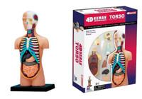 1Set 4D Human Torso Anatomy Body Anatomical Teaching Model