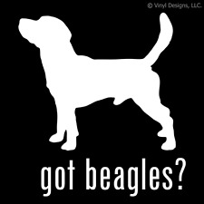 GOT BEAGLES? BEAGLE DOG DECAL - DOGS STICKER