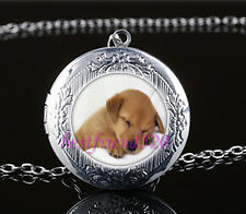Cute Baby Dog Photo Cabochon Glass Tibet Silver Locket Pendant Necklace#686