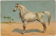 HORSES ART White ARABIAN HORSE by Alan WRIGHT Vintage Colorful Postcard 1900s