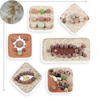 20Stk Seltene Mischung Lithops Samen Living Stones Sukkulenten Kaktus Bio S I1Z0