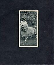 Carreras - 1936 - Dogs & Friends - No 40 - Poodle
