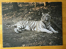 """SIGNED Charlotte Dumas """"India"""" portaits of tigers 2008 Edition of 1000"""