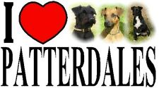 I LOVE PATTERDALES Car Sticker By Starprint - Featuring the Patterdale Terrier