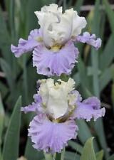 Iris Bulbs, Corms, Roots & Rhizomes