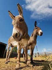 PRINT POSTER PHOTO ANIMAL NATURE LIVESTOCK DONKEY BLUE SKY FARM COOL LFMP1273