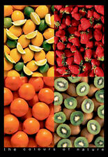 Five Fruit Bins THE COLOURS OF NATURE POSTER for Kitchen, Restaurant, Grocery